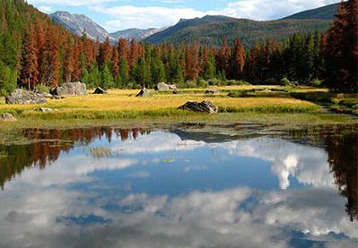 dead trees behind lake